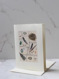Feathers Card by Elena Deshmukh for Sally Bourne Interiors London