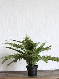 Faux Potted Fern sally bourne interiors London N10 Muswell Hill