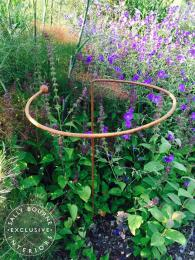 3 x Wrought Iron Circular Plant Supports flowers outdoor garden rustic