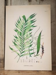 The Dybdahl Co Geonoma Multiflora Card greeting cards Sally Bourne Interiors London