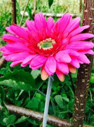 Gerbera Stem realistic Faux Fake Flowers
