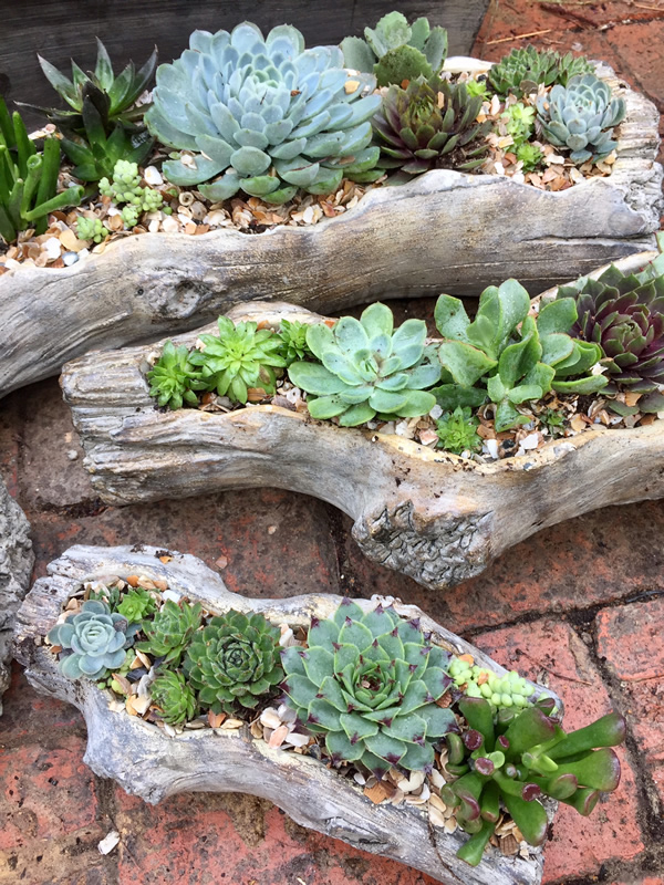 Sedum Log Resin Planters